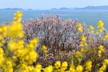 田尻 春の海