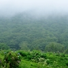 「山から霧はやってくる」