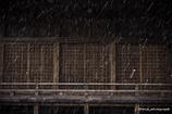 「雪の八幡様」