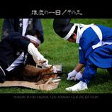 雄鹿の一日/その三