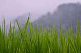 勝山の梅雨