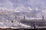 鵜殿の葦焼き2017-2