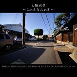 大阪珍景 ~この木なんの木~