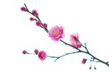 春を運ぶ梅