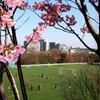 春の保土ヶ谷公園