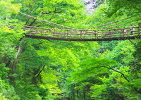 CANON Canon EOS 6Dで撮影した(吊り橋渡れ。)の写真(画像)