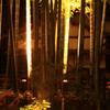 IMG_6464       三溪園竹林ライトアップ