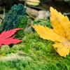 秋のコラボレーション