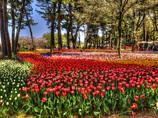花園 絵画調HDR