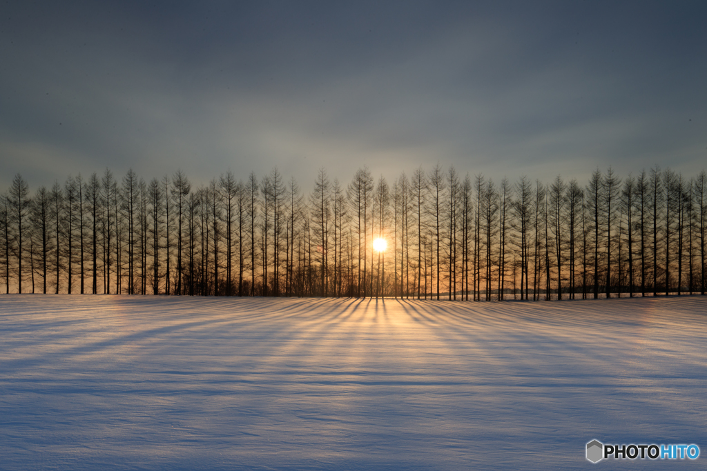 雪原を照らす