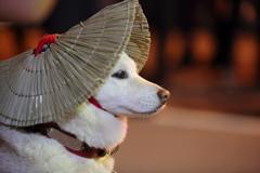 おわら風の盆2016(本祭)①