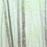 NIKON NIKON D7100で撮影した(美人林 (3))の写真(画像)
