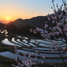 NIKON NIKON D7100で撮影した(梅の花の咲く頃)の写真(画像)