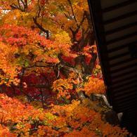 その他のカメラメーカー その他のカメラで撮影した(本土寺・秋 (3))の写真(画像)