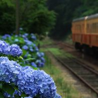 その他のカメラメーカー その他のカメラで撮影した(紫陽花の待つ駅 1)の写真(画像)