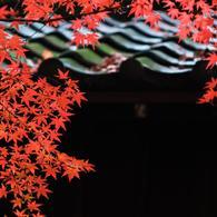 その他のカメラメーカー その他のカメラで撮影した(本土寺・秋 (1))の写真(画像)