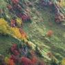 NIKON NIKON D750で撮影した(高原の錦秋 4)の写真(画像)
