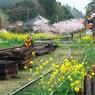 NIKON NIKON D7100で撮影した(春の里見駅)の写真(画像)