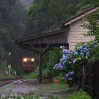 その他のカメラメーカー その他のカメラで撮影した(紫陽花の待つ駅 2)の写真(画像)