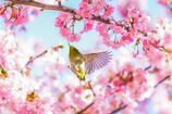 ー春を舞うー