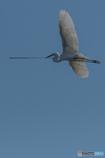 鷺山訪問「巣作り」