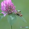赤詰草と記念写真