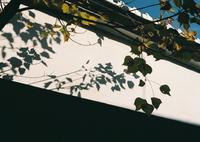 OLYMPUS OM-1で撮影した(近江小旅行ⅰ)の写真(画像)