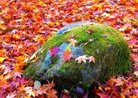 PANASONIC DMC-GX7で撮影した(秋の彩り18:一期一会(写真歌))の写真(画像)