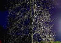 PANASONIC DMC-GX7で撮影した(写真エッセイ:夜陰枯木)の写真(画像)