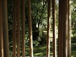 木のカーテン
