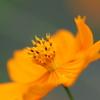 黄色い御苑