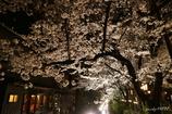 高瀬川NIGHT