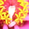お花の中にお花発見!