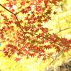秋のコラボ
