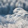 凍てつく朝VOL.1