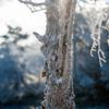 凍てつく朝VOL.2