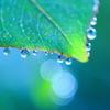 Art of morning dew Pt3