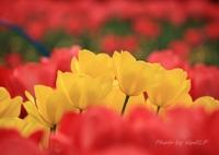 CANON Canon EOS 5D Mark IIIで撮影した(Spring Song ♪)の写真(画像)