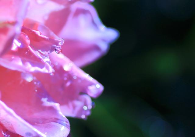 Art of rain Pt7