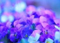 My spring image