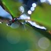 Art of rain Pt20