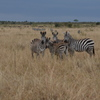 マサイマラ国立保護区(ケニア)