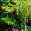 秋保の神木
