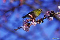今日の鳥 IMGP9757