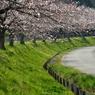 春が来た見沼ー1