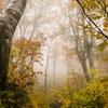 autumn_world_2013