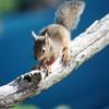 squirrel 038'