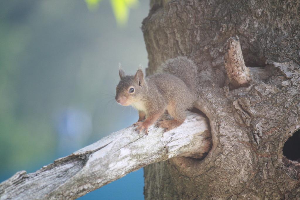 squirrel 015