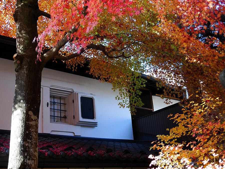 白壁と紅葉