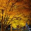 東京ドームの紅葉ライトアップ